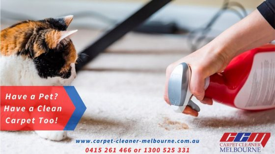 Have a Pet? Have a Clean Carpet Too!